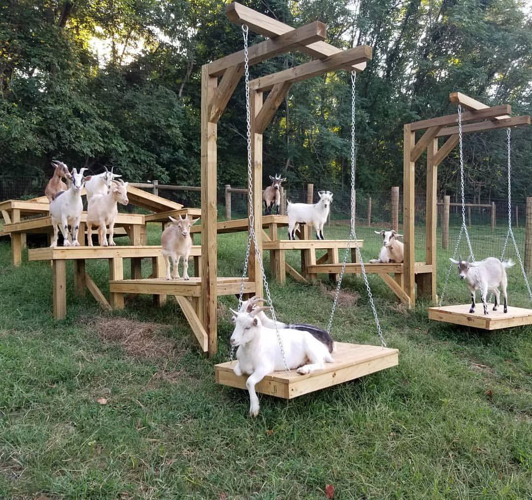 Goat Playground, Goat Farming, Goat House
