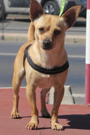 Hund Mix Mischling Rude 1 8 Jahre In Landau Baden Wurttemberg