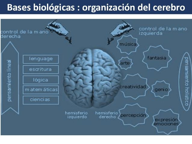 Bases Biológicas Del Aprendizaje Aprendizaje Biologico Base