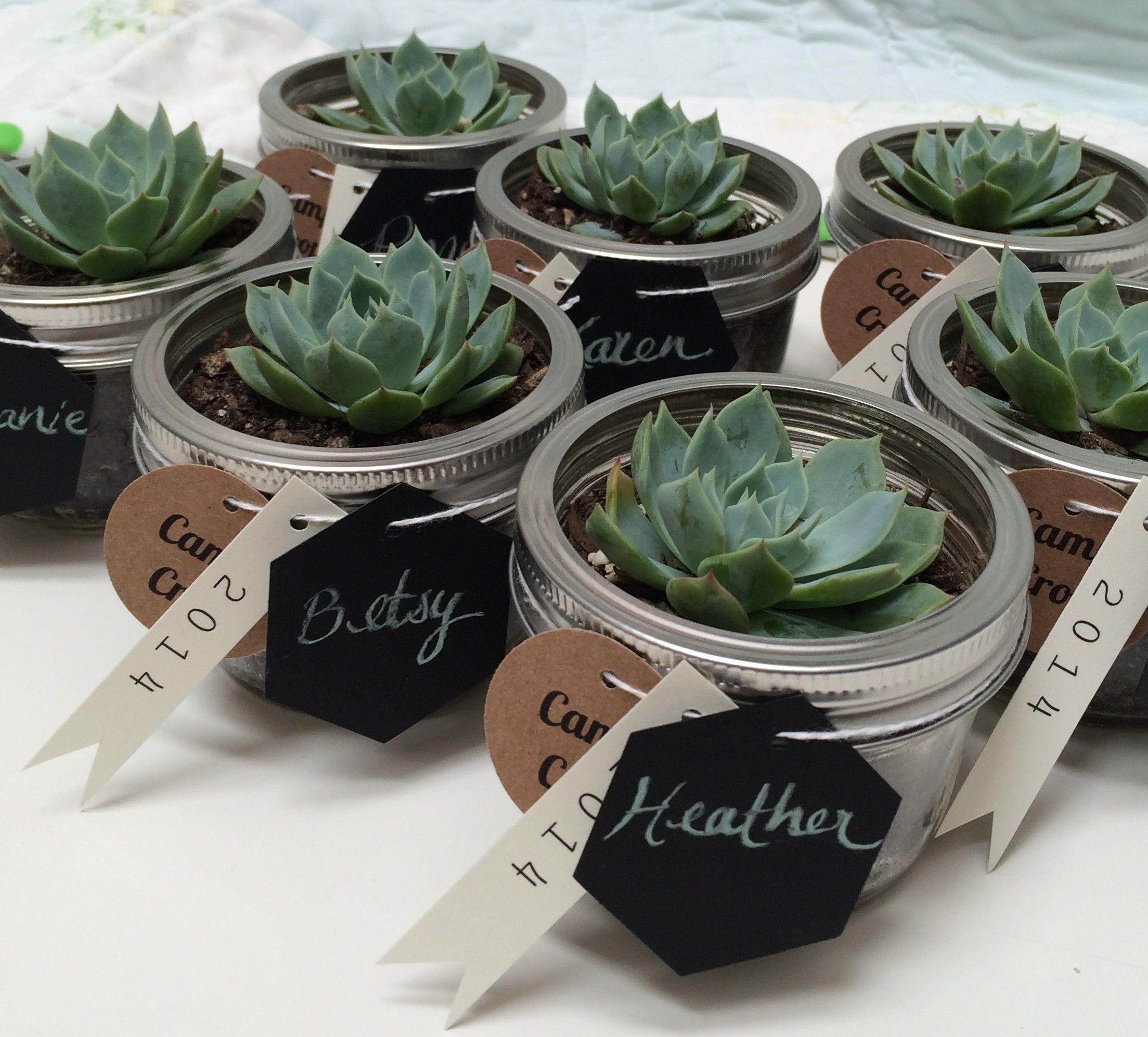 Mini succulents in mason jars. Gifts or place settings