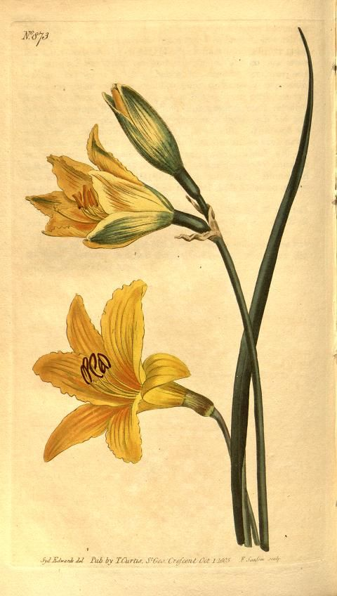 v.21-22 (1804-1805) - Curtis's botanical magazine. - Biodiversity Heritage Library