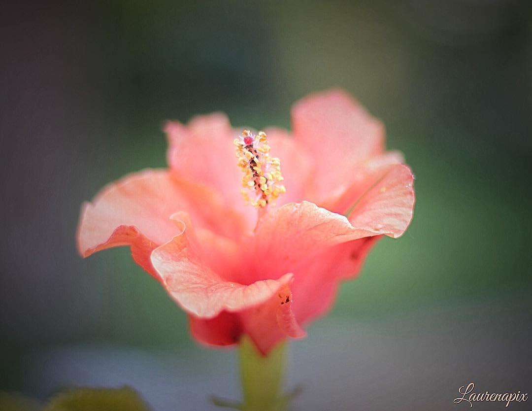 Bon week-end à tous  Have a nice week end everyone �� #amazing #flower #flowers #flowerstagram #flowerslovers #nature #naturelovers #picoftheday #photoshoot #photography #photographer #photooftheday #travel #traveling #travelgram #travelgirl #instagram #instalike #instadaily #instamoment #wonderful #france #beauty #bestnatureshot #love http://gelinshop.com/ipost/1523845636473174718/?code=BUlyYhegzq-
