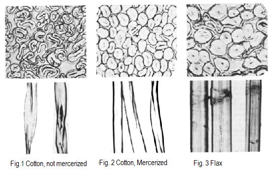 the importance and applications of mercerising fibres Dragonplate's carbon fiber can be used for many applications including robotics, uav and aeronautics, musical instrument reinforcement, sports eqipment and more.