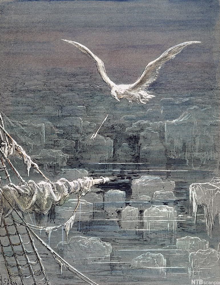 Albatross Rime Of The Ancient Mariner Google Search Ancient