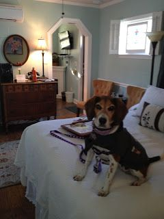 Finding Pet Friendly Holiday Rentals In St Augustine Florida With Holiday Lettings Phot Dog Friendly Beach Vacations Dog Friendly Beach Pet Friendly Holidays