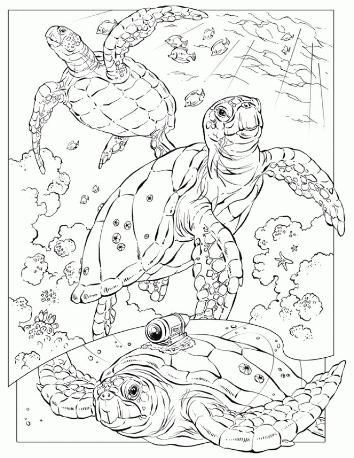 Realistic Sea Turtle Coloring Pages For Adults Turtle Coloring
