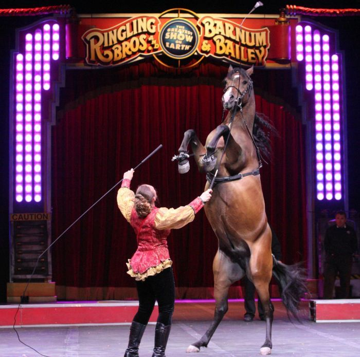 Ringling Bros Brings Fully Charged Show To Atlantic City Bros Atlantic City New Shows