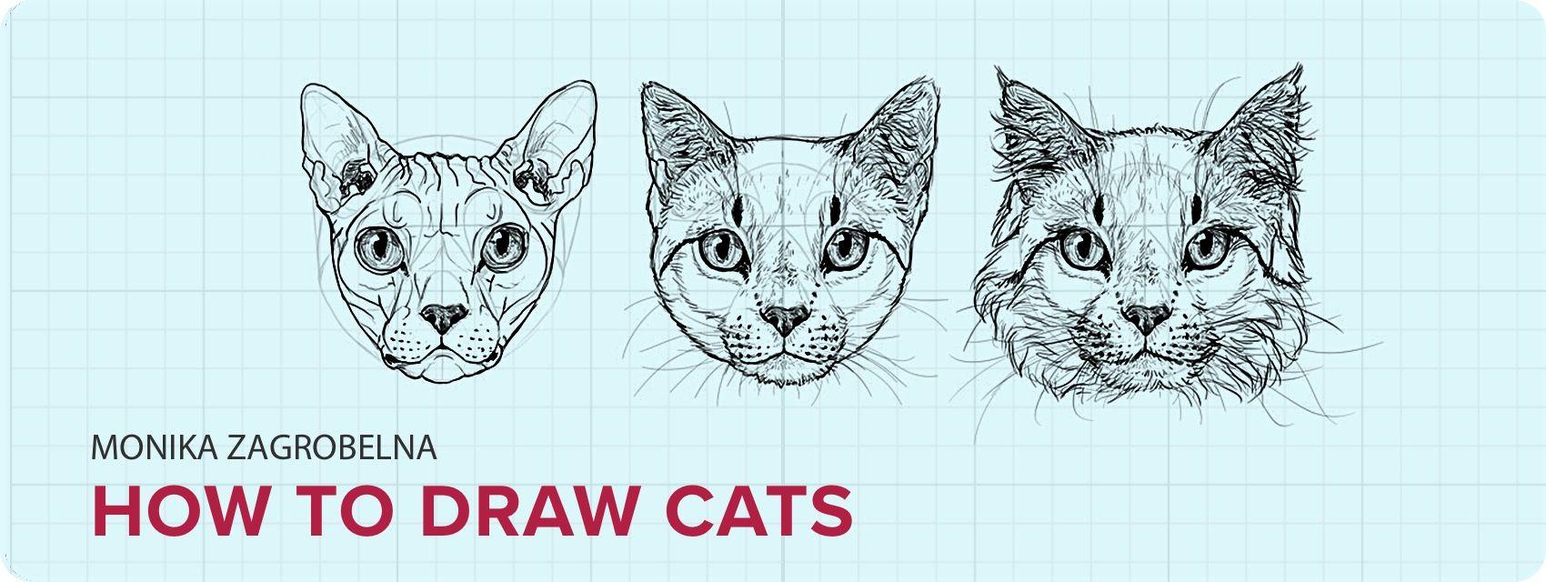 How to Draw Cats: Monika Zagrobelna\'s Detailed Approach — Monika ...