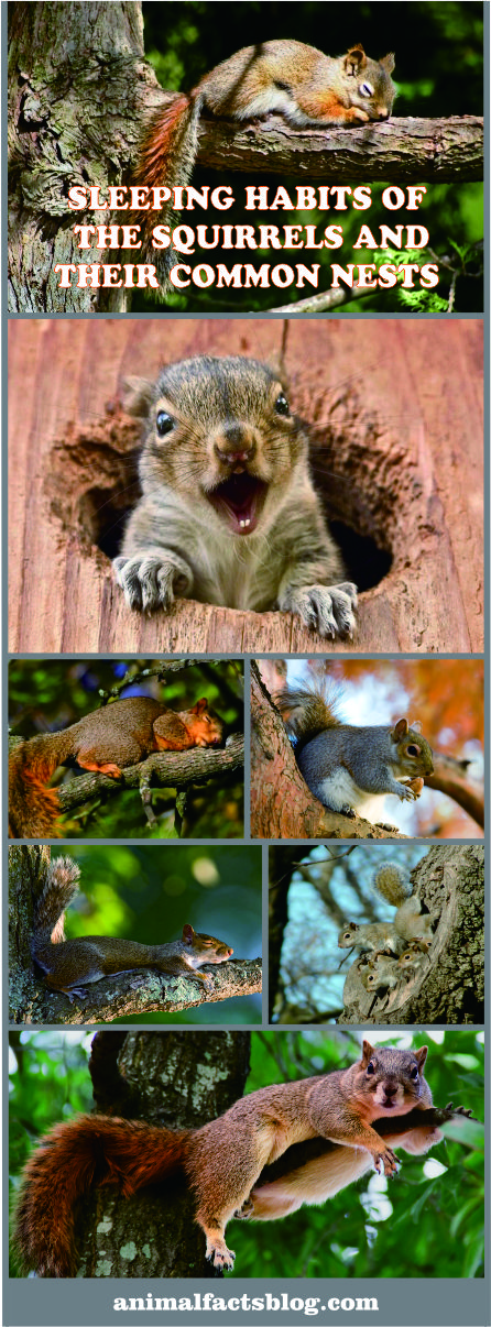 Sleeping Habits Of The Squirrels And Their Common Nests   Anifa Blog