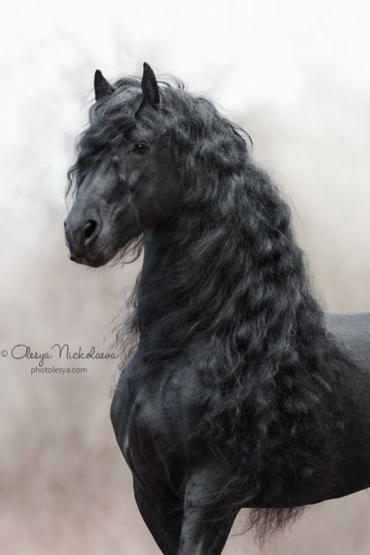 Horses Image By Beth Lauderdale On Horse Friesian Horse Photography
