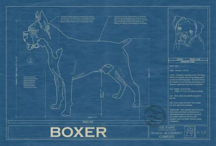 Animal blueprint company boxer dog blueprint put up your dukes animal blueprint company boxer dog blueprint malvernweather Gallery