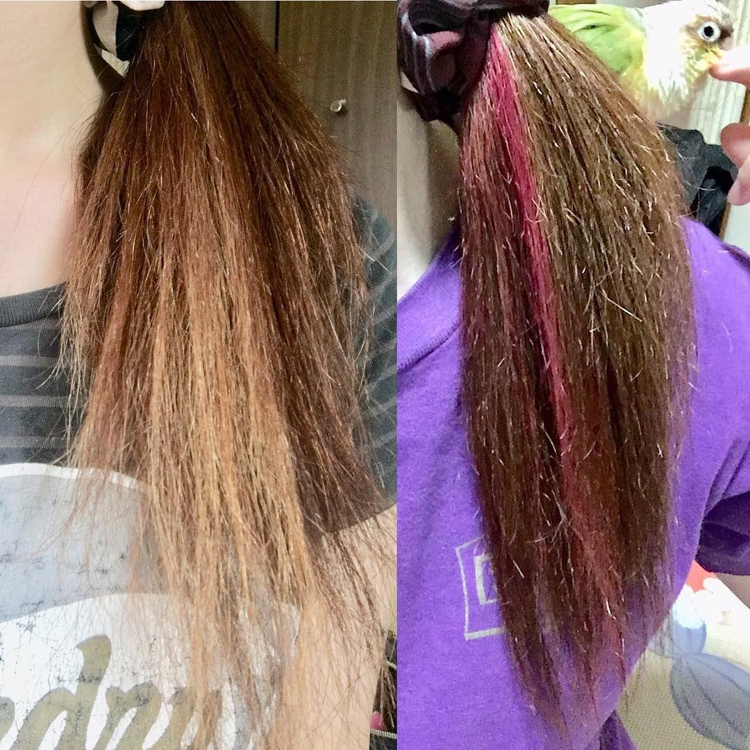 金金の汚い色からピンクへ 思ったより色が入って仕事大丈夫か不安 インナーだから目立たないから大丈夫かな この髪の傷みどうにかしたいー 切らない方法でなんとかならないかなぁ ヘアカラー マニパニ インナーカラーピンク インナーカラー ピンク ピンク