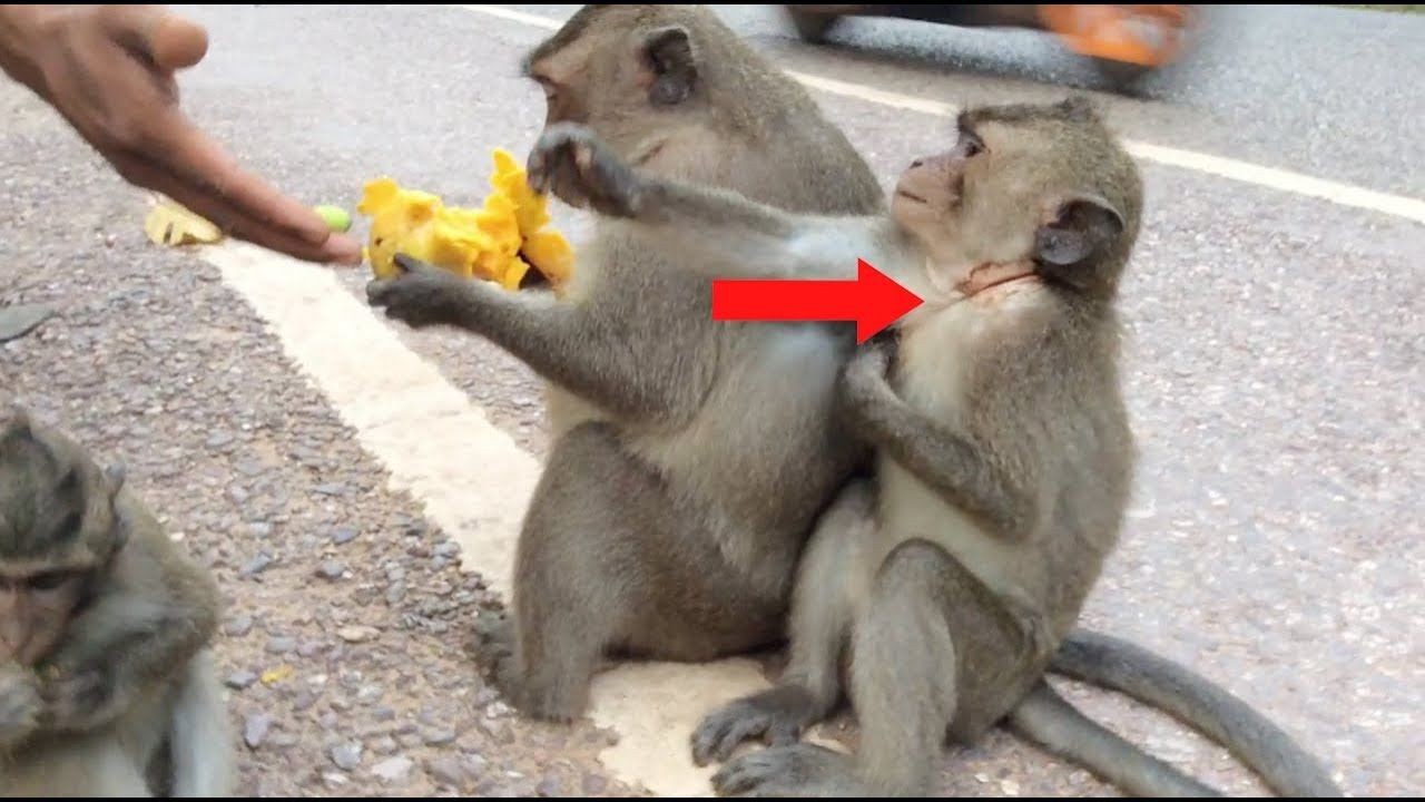 How To Take Out Rubber Band From Monkey, monkeys 1065 Tube