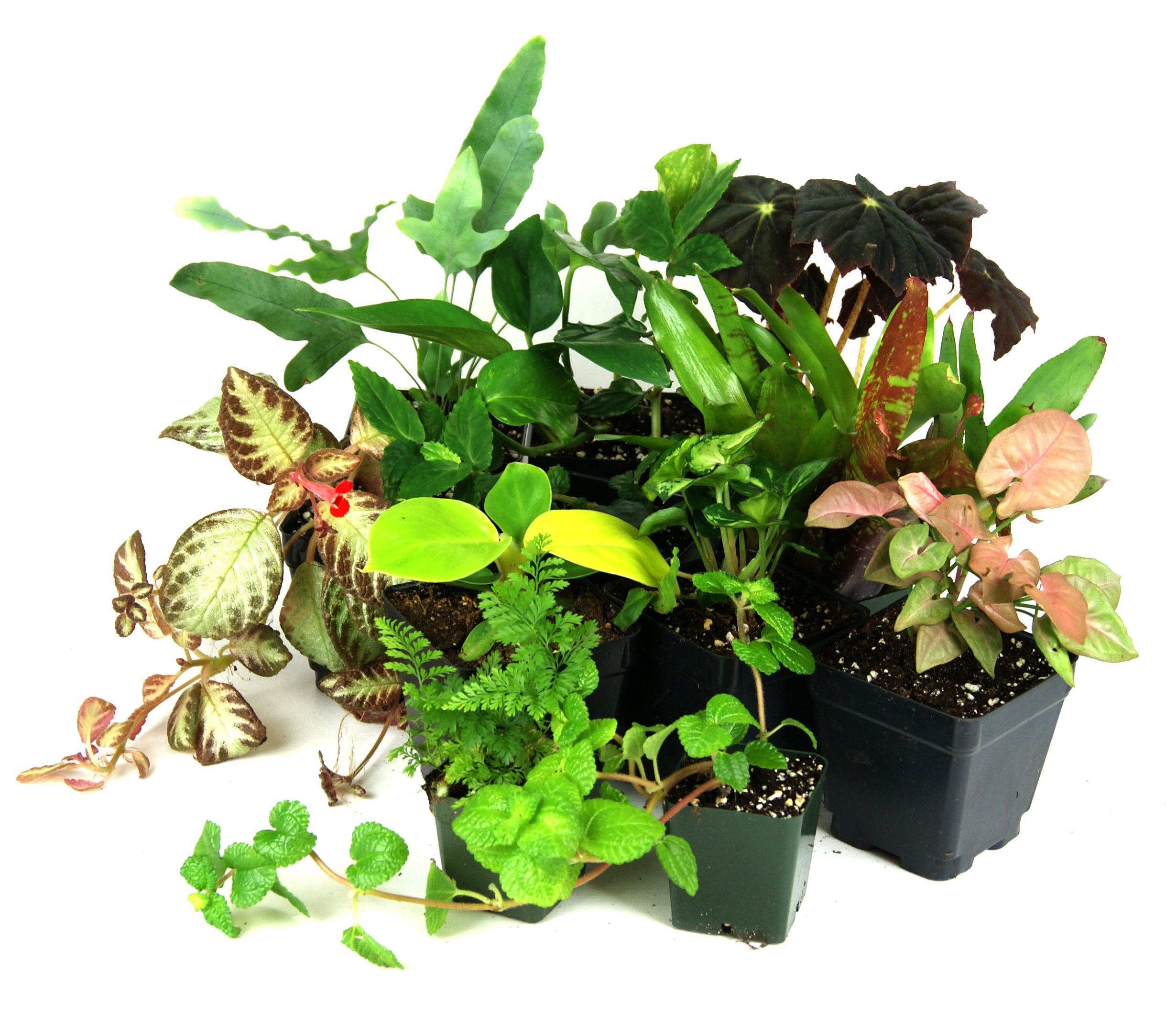 Plant Bundles For Your Dart Frog Tanks Beautiful Selection Of