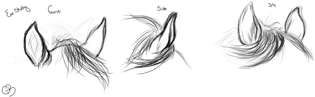 Pin By Makayla Dace On Art Sketches Horse Ears Horse Sketch