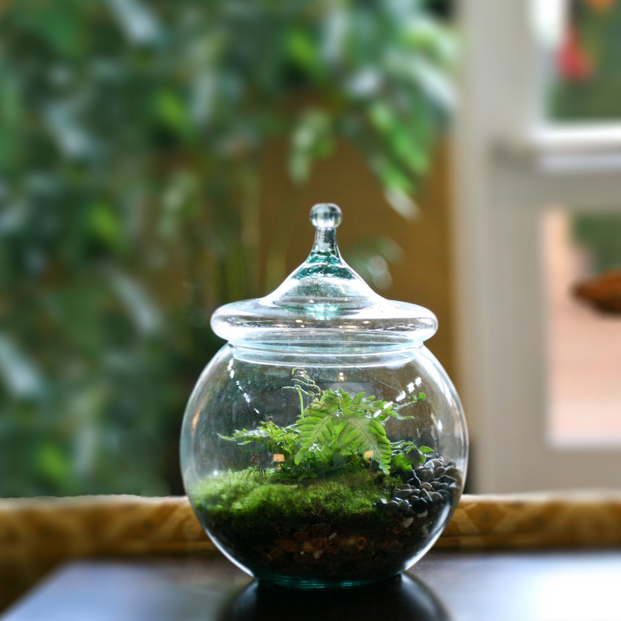 Colonial house forest heights greens terrarium colonial
