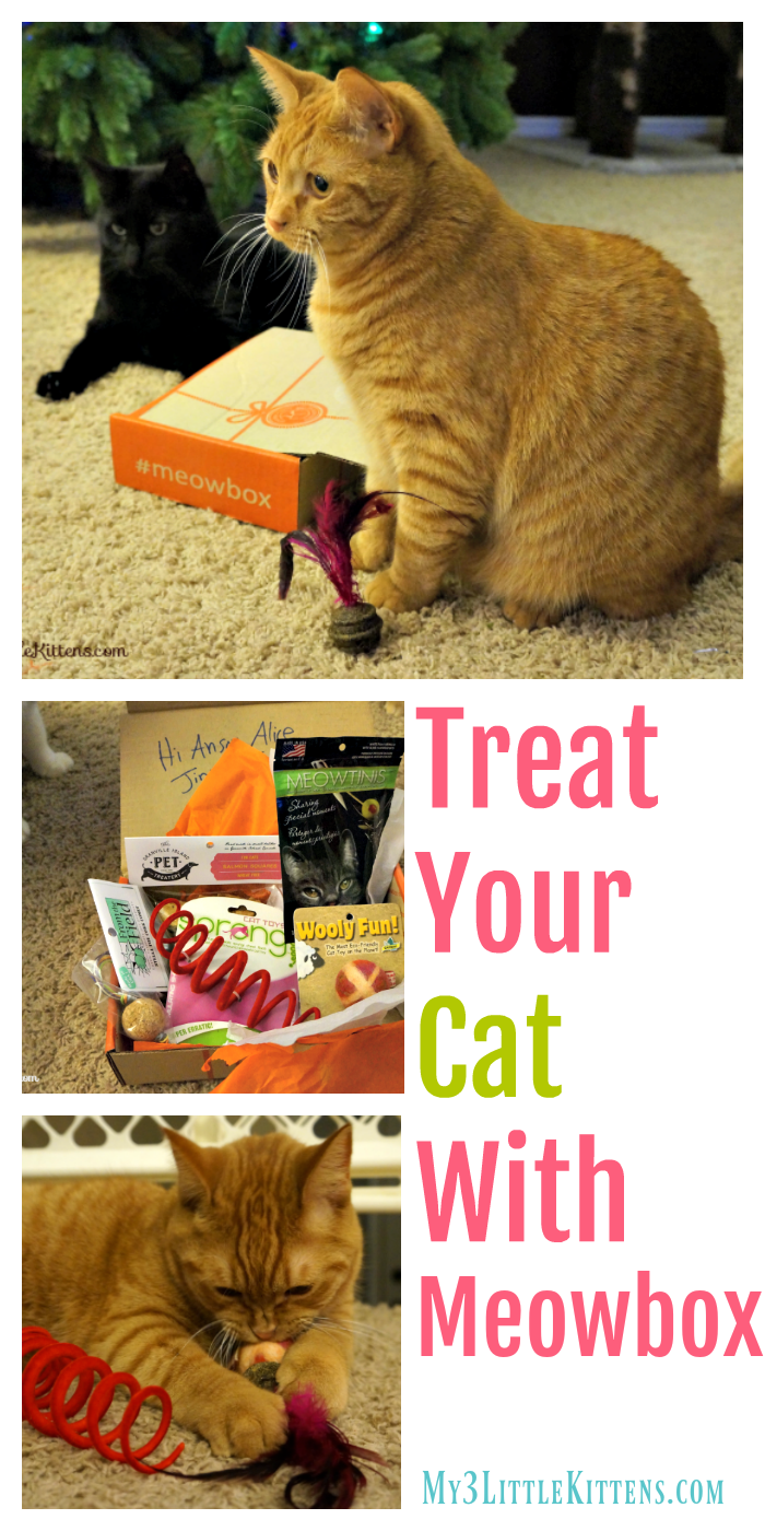 Treat Your Cat With Meowbox. You and Your Cat Will Love All the Toys, Treats and More!