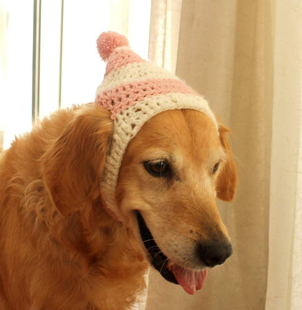 Dog Hat Beanie Winter For Dogs Large Breed Christmas Photo Prop Holiday Pinned By