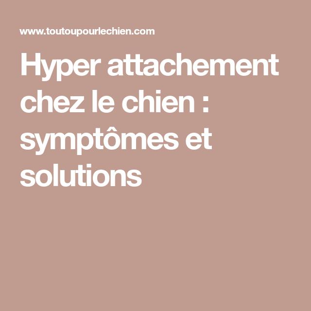 Hyper Attachement Chez Le Chien Symptômes Et Solutions