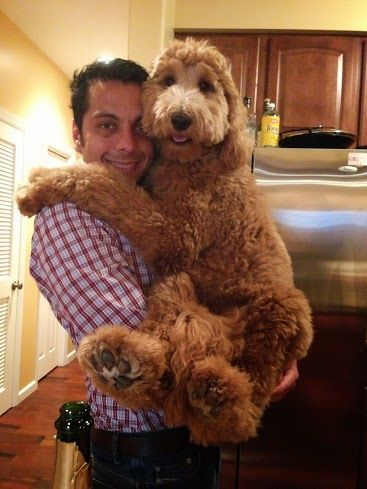 Fun pics of dogs and their owners!