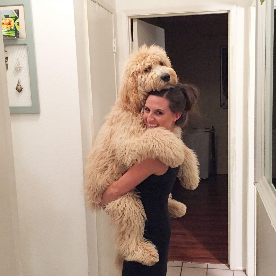 Resultado de imagen para 犬 Goldendoodle  抱きしめる
