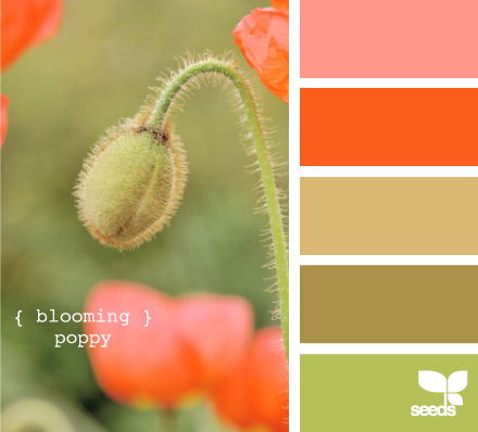 Not normally a favorite color scheme...but they coordinate really well all together! :D <3 [http://www.design-seeds.com/search/label/flora]