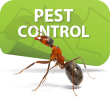 He Responsible Year Round Protection Program Is Designed To Keep Invading Pests Out Of Your Home Throughout The Termite Control Pest Control Termite Treatment