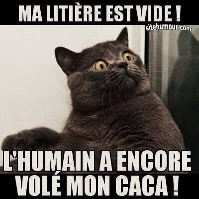 Gut bekannt Les images les plus drôles sur sitehumour.com | Citations  QQ31