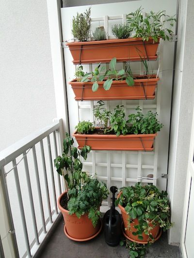 A Vegetable Garden On Small Balcony Hanging Planters With Herbs Red Peppers And Strawberries
