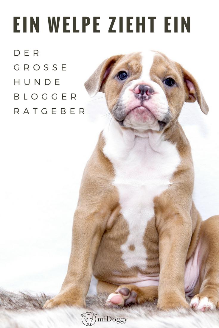 Welpe Hund Hunde Tipps Ideen Welpen Stubenreinheit Beisshemmung Welpenstunde Welpen Hunde Hundchen Training