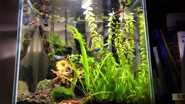 The Best Nano Tank Setups The Aquarium Guide Nano Tank Neon Tetra Aquascape
