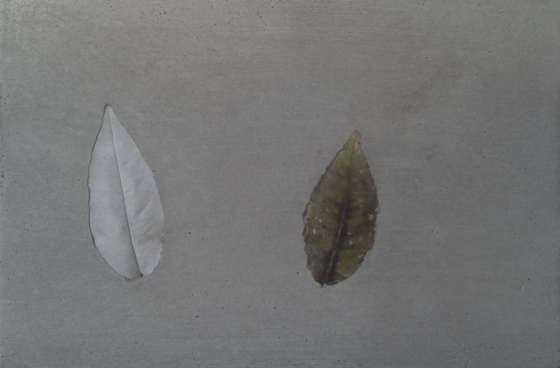 placa de hormigón estampada con motivos naturales