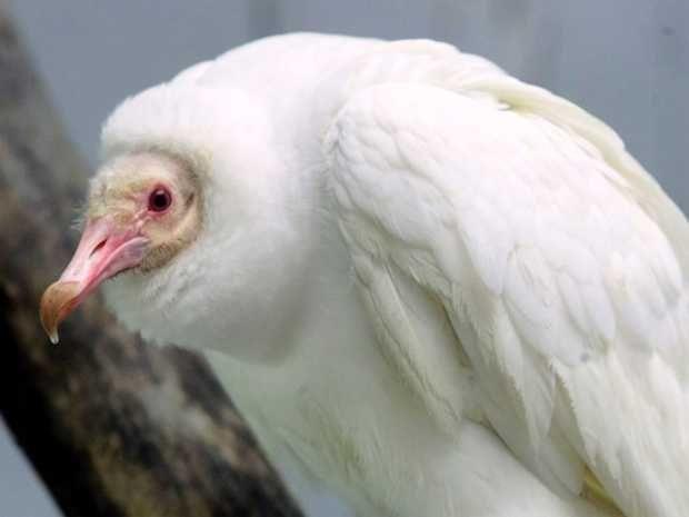 extraordinary albino animals #albinoanimals