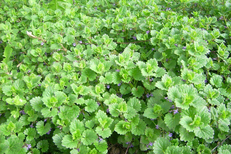 Photo of Recognize pointer plants
