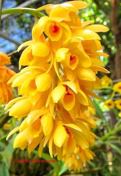 Pin By Lisa Davis On Color Me Yellow Jaune Giallo Orchidee