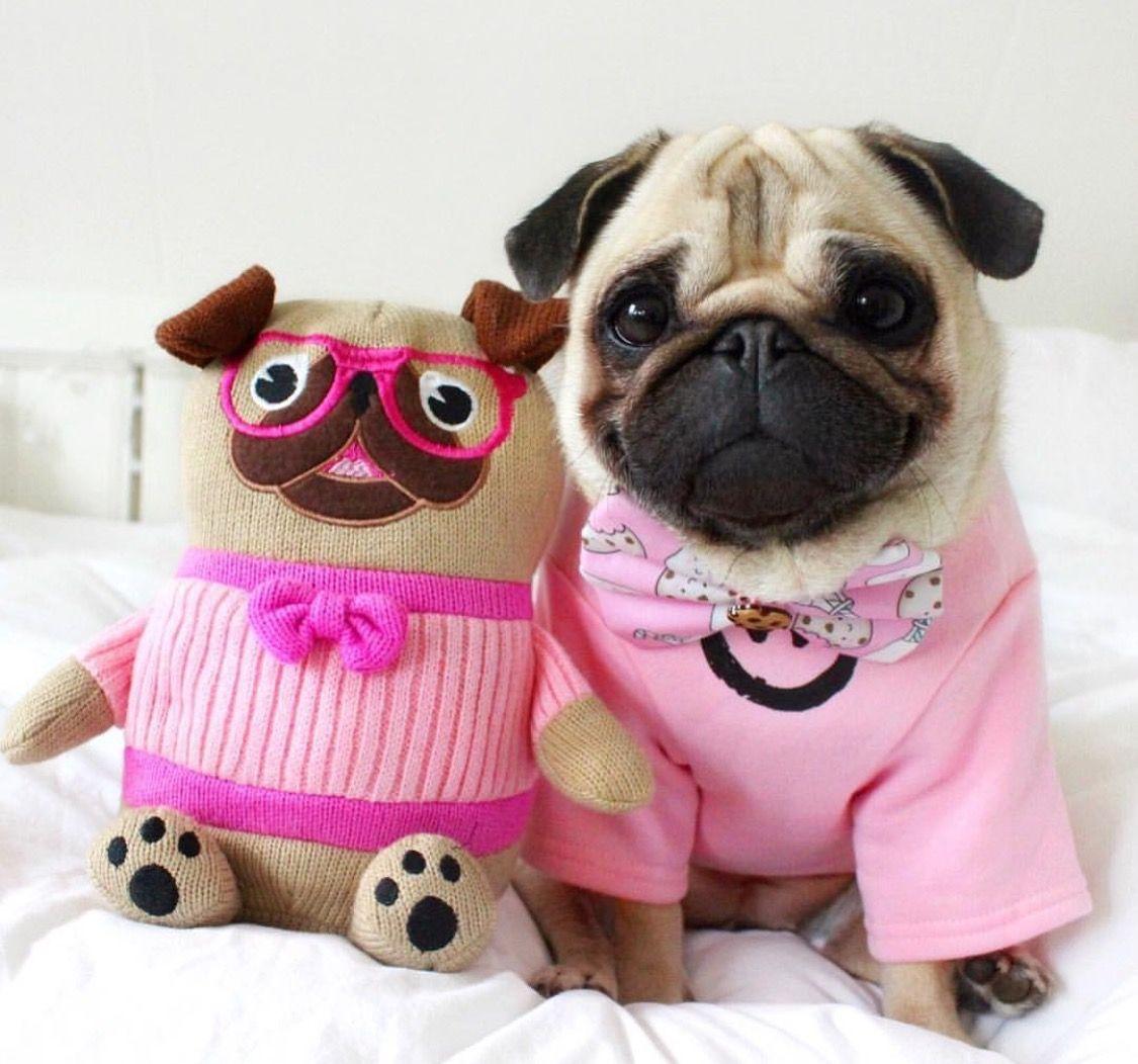Pin de Natalie Would en Pug | Pinterest