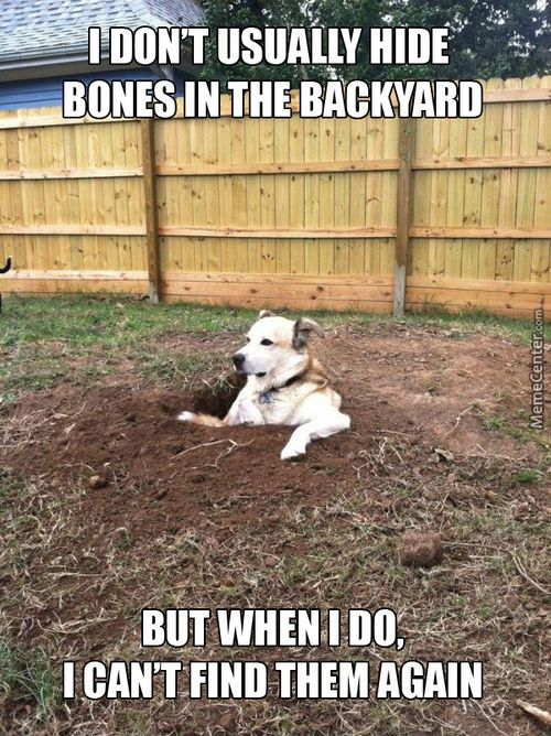 Monday Funny Pictures Dump Funny Dog Pictures Funny Dogs
