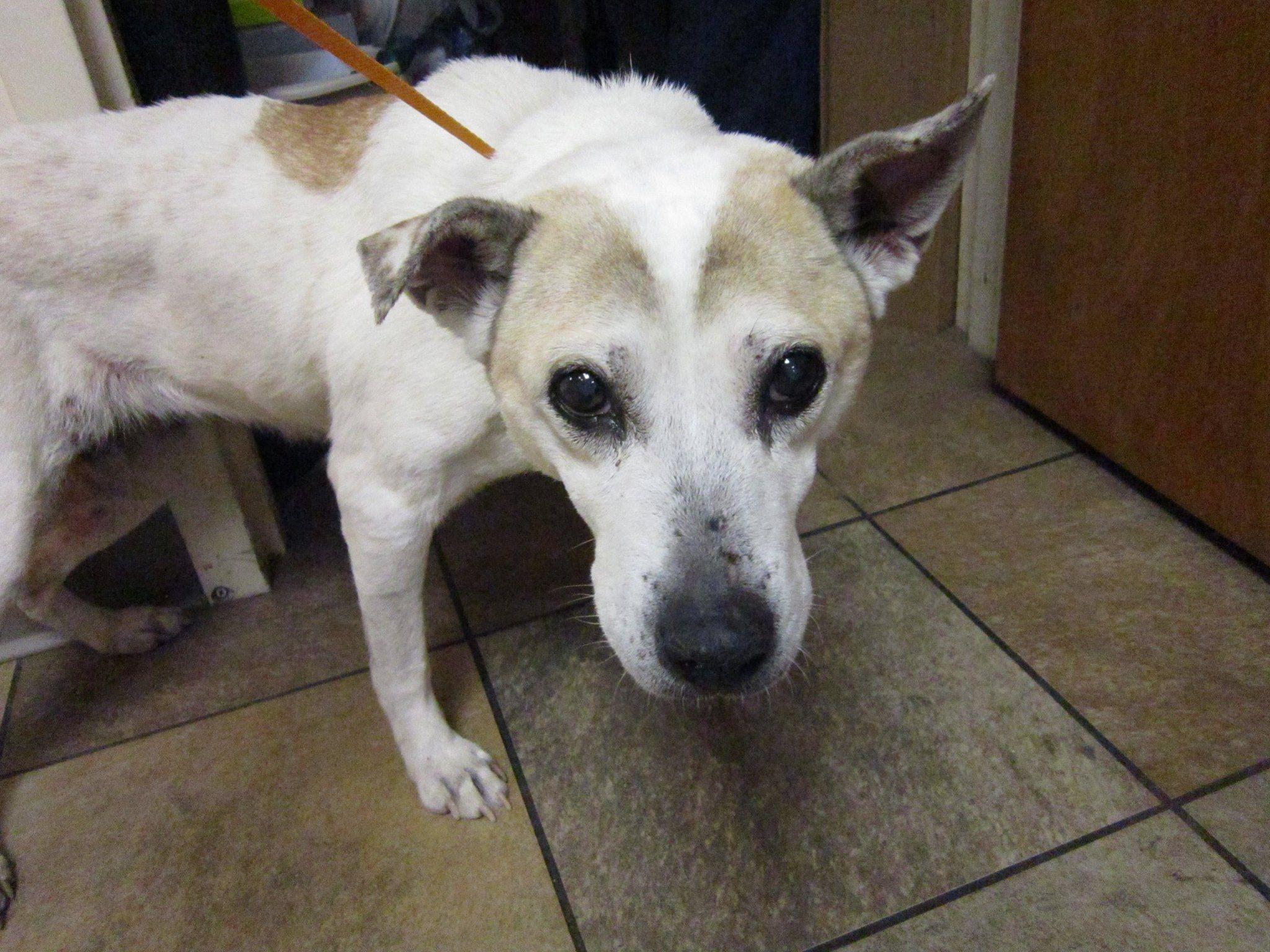 Middletown Animal Control tan white· This dog was found