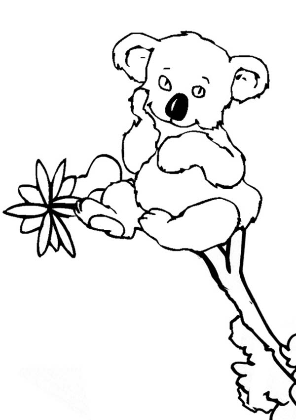 Koala Colouring Pages Koala Drawing Animal Coloring Pages Animal Drawings