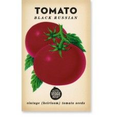 The Little Veggie Patch Co Black Russian Tomato Heirloom Seeds $4.50 - A gorgeous mahogany coloured tomato that is rich and spicy in flavour #seeds #thelittleveggiepatchco #gardengifts