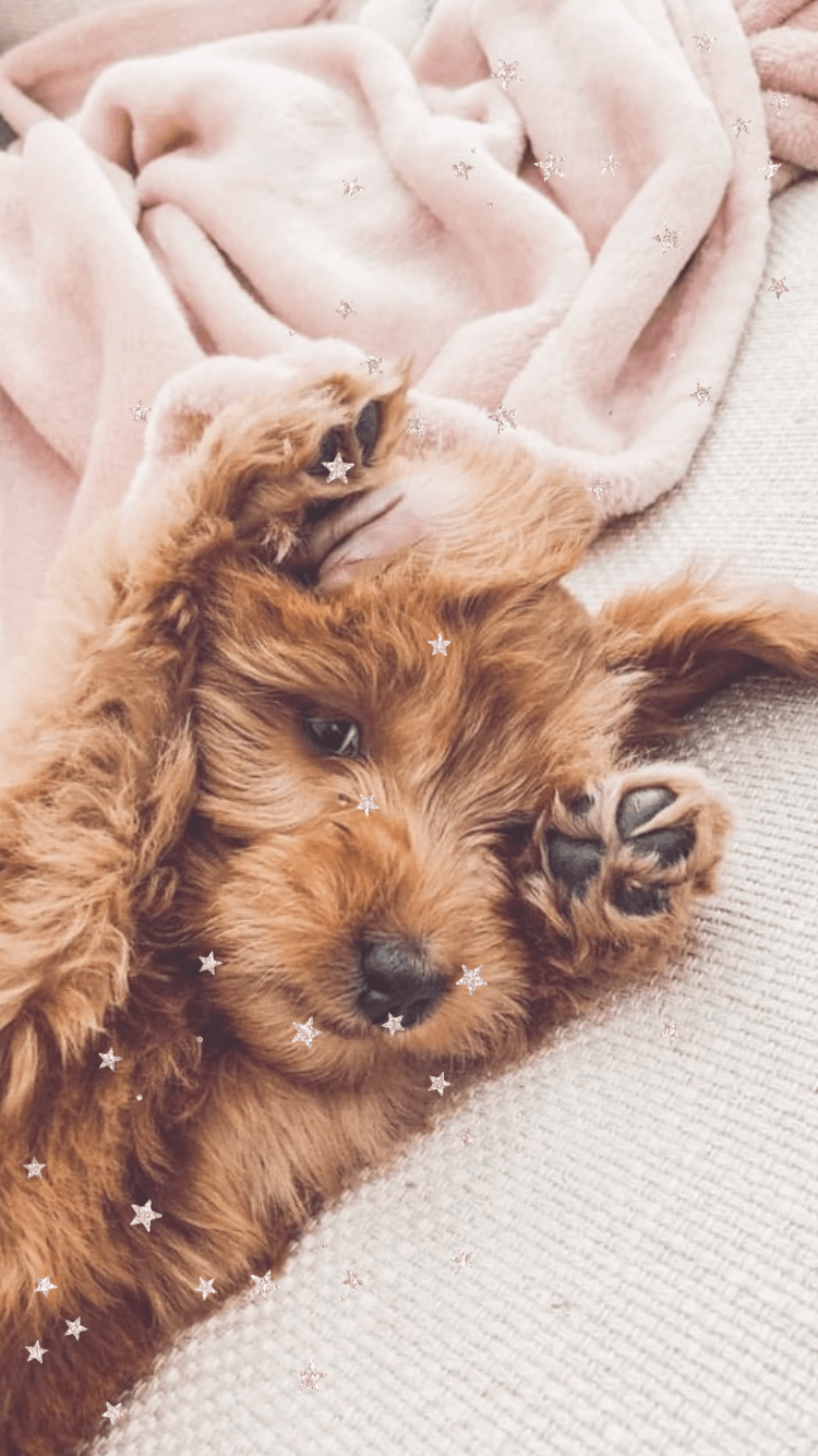 The Best Cute Iphone Wallpaper Backgrounds For Teens And For Girls Download For Free Looking For Cute Wallpa In 2020 Cute Dog Wallpaper Cute Dogs Cute Animal Photos