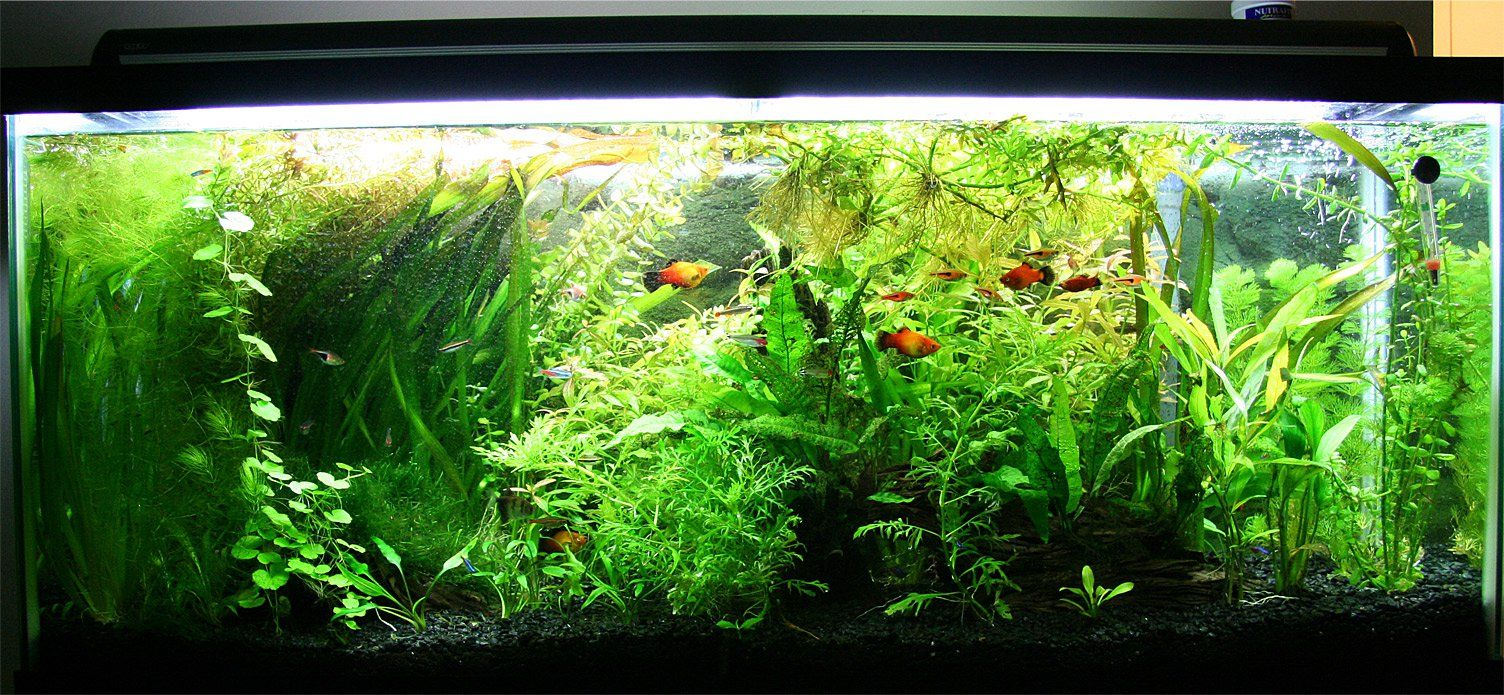 Fish aquarium how to maintain - How To Set Up And Keep A 55 Gallon Fish Tank