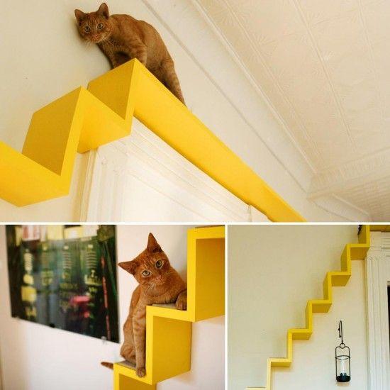 Decoracao Casa Animais Escadas Pelas Paredes Gatos Gatos