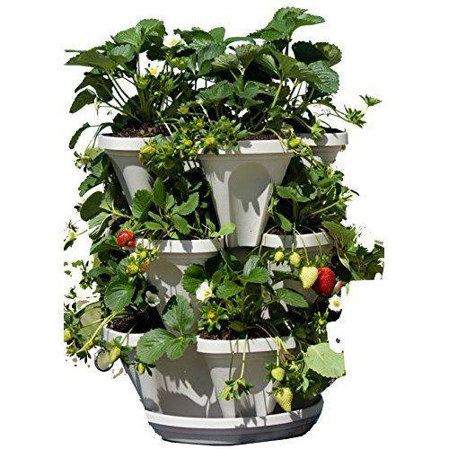 Www Amazon Com Large Tier Vertical Garden Tower Dp B017bsey8w Ref Pd Sbs 86 3 Ie Utf8 Dpid 41 Vertical Herb Gardens Vertical Garden Planters Strawberry Garden
