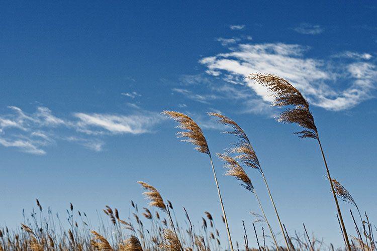 Resultado de imagen de wind