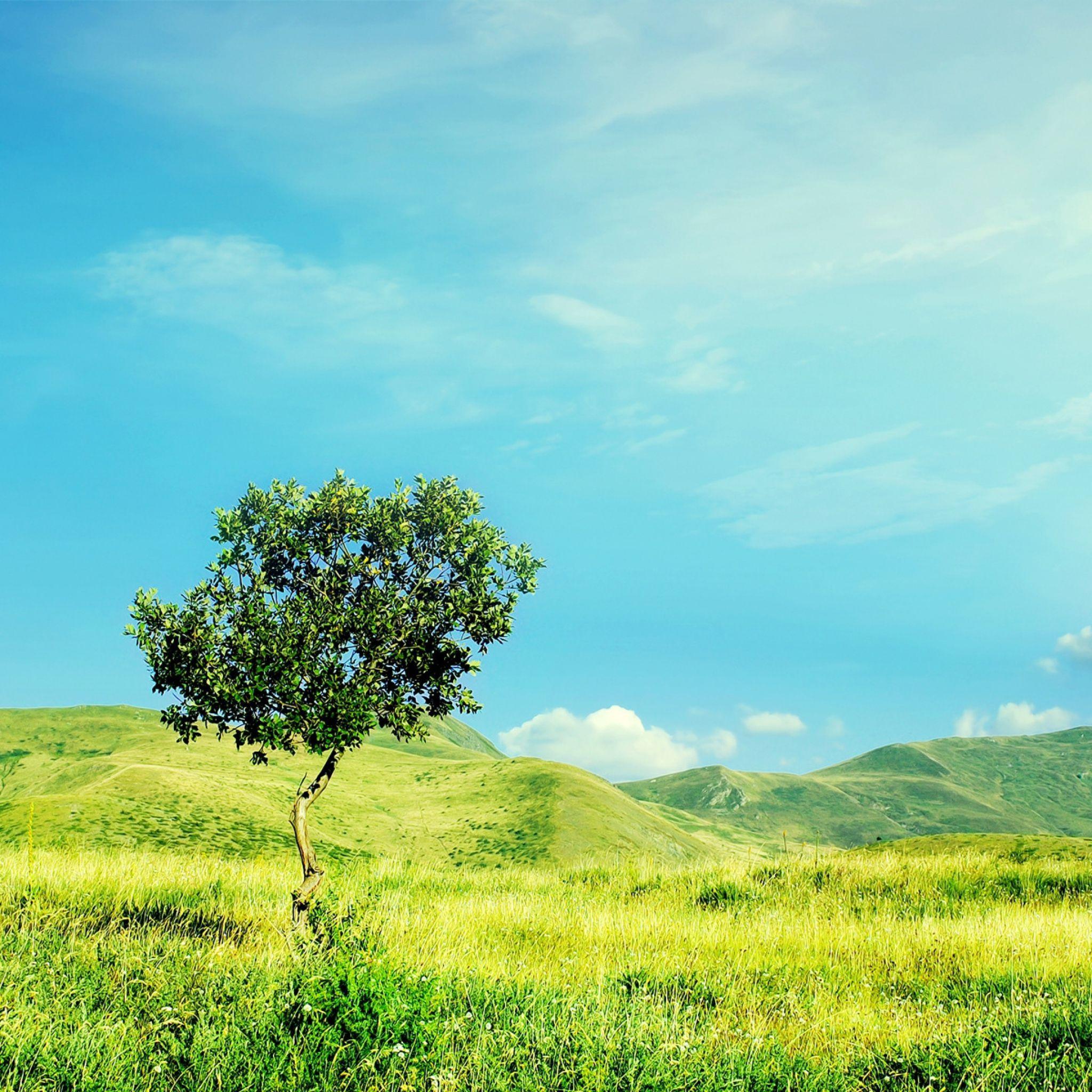 2048x2048 Wallpaper árvore, verão, dia, sozinha, campo, prado