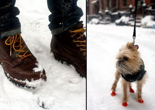 Dog boots, Snow dogs