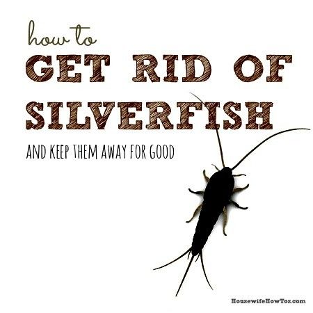 How To Get Rid Of Silverfish Naturally Get Rid Of Silverfish