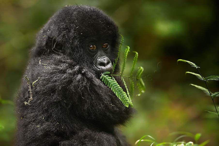 50 dos animais exóticos mais bonitos da Terra 20
