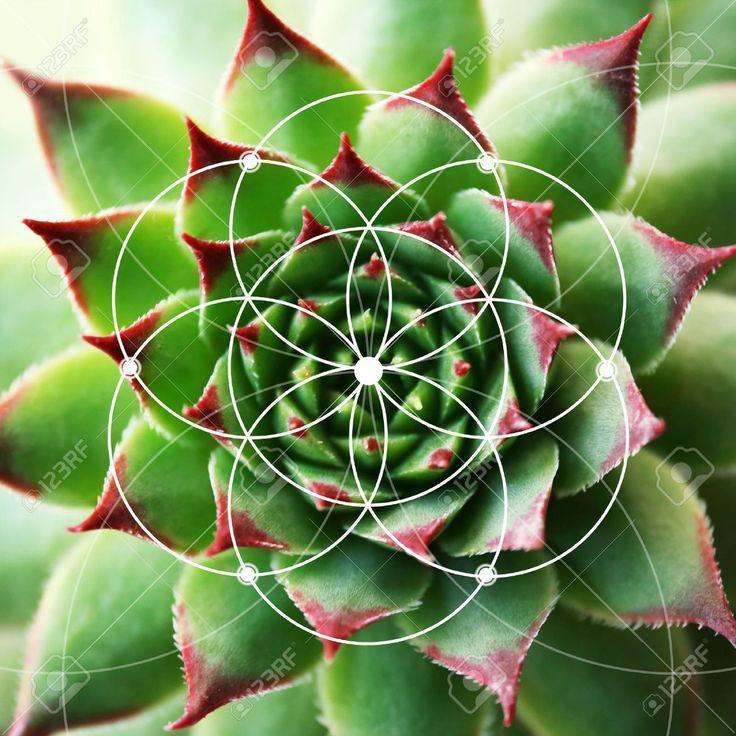 Illustration Of Spiral Arrangement In Nature. Fibonacci Pattern ... #fibonacci #mathactivitiesforkids #elementarymath #fibonacciart #goldenratio